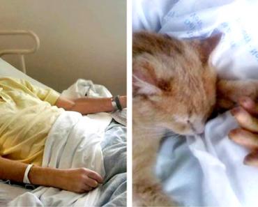 tom-cat-hospital-10