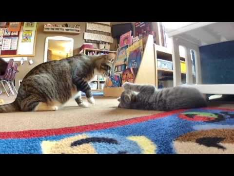 Katze trifft Katzenbaby zum ersten Mal