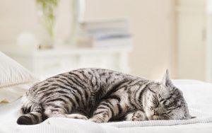 kosten-katze-einschlafern