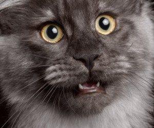 meine-katze-miaut-nicht