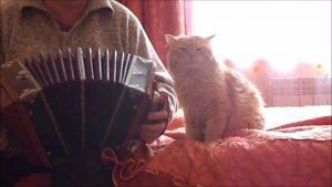 Süße Katze liebt Akkordeonspiel ihres Lieblingsmenschen