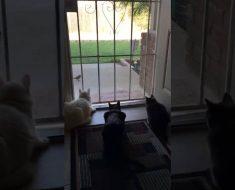 Überraschungsangriff von hinten: Hund erschreckt Katzen