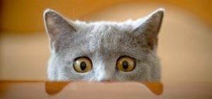 Katzen sind einfach sie selbst, aber darin alleine schon witzig genug.