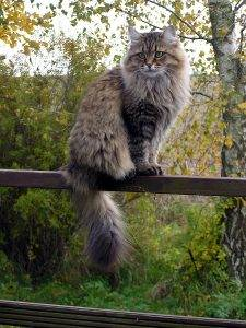 Katze trotz allergie 2