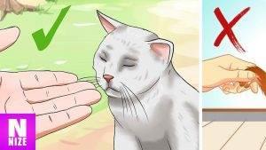 Wie Katzen dir ihre Zuneigung zeigen