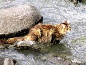 Katzen baden, diese Katze will nicht baden gehen