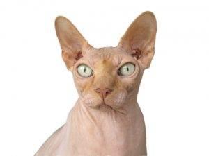 Katze trotz allergie 3