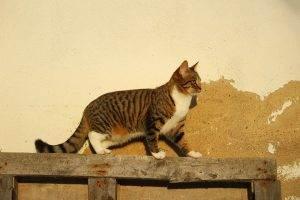Katze Wand